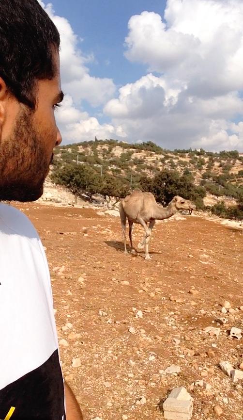 Völlig beeindruckt, joggt hinter mir ein echtes Kamel her.
